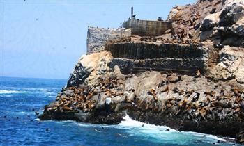 Tour Marino Bahía del Callao en Catamaràn Mikeira