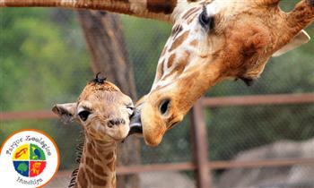 Zoológico de Huachipa ¡Muestra el cupón desde tu celular!