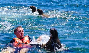 Callao-La Punta: Full day de playa en Yate, nada con lobos marinos en Islas Palomino