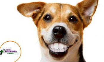 Consulta médica + profilaxis dental con ultrasonido para mascotas