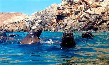Miraflores: Islas Palomino en yate con show, nado con lobos marinos y más en Turibus