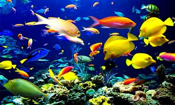 Acuario Nautilus entrada para niño o adulto + alimento para peces