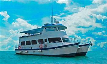 Tour Marino a Isla Palomino + nado con lobos marinos + buceo profesional