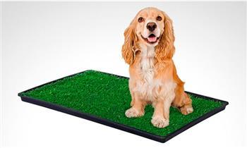 baño ecológico portátil para mascotas medianas con Otto Ware
